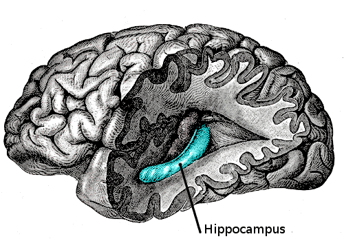 Zinc for ADHD Hippocampus Learning and Memories