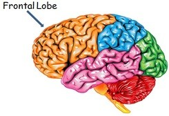 ADHD Awareness Month ADHD is Real Frontal Lobe