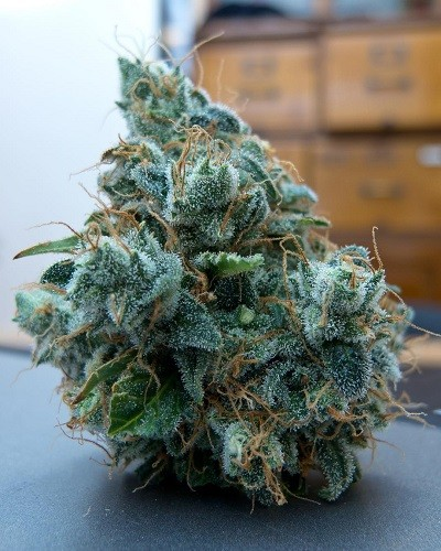 Using Cannabis for ADHD Possible Downsides